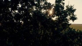 Stralen van de de zomerzon die door het groene gebladerte van de bomen glanzen stock footage