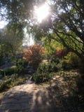 Stralen van de zon door de bomen Royalty-vrije Stock Foto