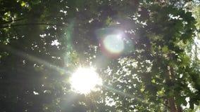 Stralen van de zon door het gebladerte, mooie bokeh, verticale beweging, backgro stock video