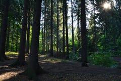 Stralen van de zon in het bos Royalty-vrije Stock Foto
