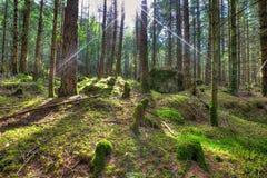 Stralen van de zon in het verrukte bos in HDR stock afbeeldingen