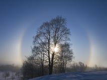 Stralen van een de winter het toenemen zon. Stock Afbeeldingen