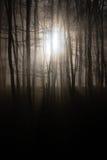 Stralen van licht die door de bomen worden gezien Stock Foto