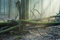 Stralen van ligth over deadwood Stock Afbeeldingen