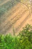 Stralen van zon Stock Foto