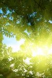 Stralen van zon in bos Royalty-vrije Stock Afbeeldingen