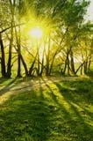 Stralen van zon in de zomerbos Royalty-vrije Stock Afbeeldingen