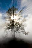Stralen van Zonlicht in het Nationale Park van Yellowstone Royalty-vrije Stock Foto's