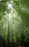 Stralen van zonneschijn in een hout Royalty-vrije Stock Foto