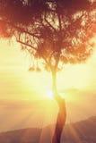 Stralen van zonsondergangzon door de boom Stock Afbeeldingen