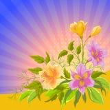 Stralende de achtergrond van de bloem, alstroemeria Stock Fotografie