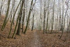 Stran Nemosicka, лес граба - интересное волшебное место природы в температурах зимы, который замерли ветвях дерева Стоковые Фотографии RF
