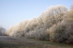 Stran Nemosicka, лес граба - интересное волшебное место природы в температурах зимы, который замерли ветвях дерева Стоковые Изображения
