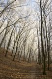 Stran Nemosicka, лес граба - интересное волшебное место природы в температурах зимы, который замерли ветвях дерева Стоковое Изображение