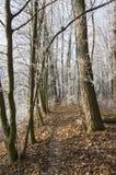 Stran Nemosicka, лес граба - интересное волшебное место природы в температурах зимы, который замерли ветвях дерева Стоковое фото RF