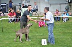 Stranavy,斯洛伐克- 2017年9月10日:法官祝贺一个类别的优胜者在地方狗展示的,品种是尖的狗 免版税库存图片