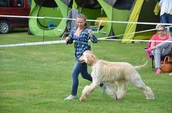 Stranavy, Словакия - 10-ое сентября 2017: Женщина бежит с собакой - афганской борзой внутри местная выставка собак Стоковая Фотография