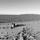 Strandöhund Fotografering för Bildbyråer
