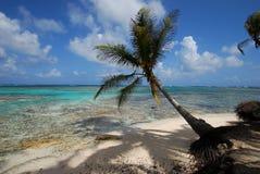 strandön gömma i handflatan paradistreen Royaltyfri Bild