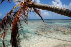 strandön gömma i handflatan paradistreen Royaltyfri Fotografi