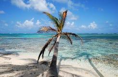strandön gömma i handflatan paradistreen Arkivfoto