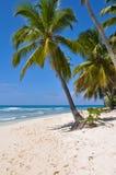 strandön gömma i handflatan paradistreen Arkivbild