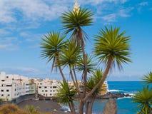 strand över palmträd Arkivfoton