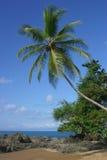 strand över palmträd Royaltyfri Bild