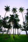 Strand 2 van de kokosnoot Stock Afbeelding