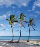 strand royaltyfria foton