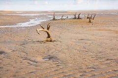 Strand-Abnutzung mit toten Bäumen Lizenzfreies Stockbild