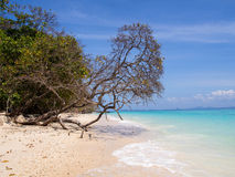 Strand auf Koh Rock Island Stockfotos