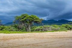 Strand auf Maui Stockfoto