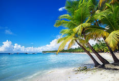 Strand auf Saona-Insel in den Karibischen Meeren Lizenzfreies Stockbild