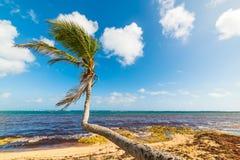 Strand Autre Bord in Guadeloupe stockbild