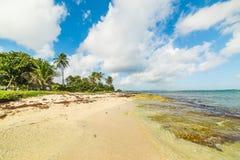 Strand Autre Bord in Le Moule in Guadeloupe stockfotografie