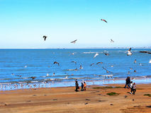 Strand av Chipiona i Cadiz Royaltyfri Foto