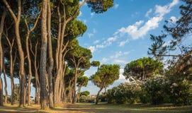 Strand av den Roseto deglien Abruzzi, Abruzzo, Italien Den Roseto deglien Abruzzi är också bekant som den rosa `en för `-Lido del Arkivbild