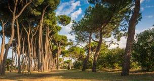 Strand av den Roseto deglien Abruzzi, Abruzzo, Italien Den Roseto deglien Abruzzi är också bekant som den rosa `en för `-Lido del Royaltyfri Foto