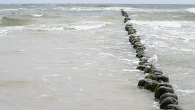 Strand av det baltiska havet Arkivfoton