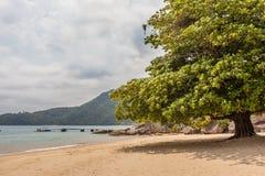 Strand av Engenho - Paraty - RJ - Brasilien arkivbilder