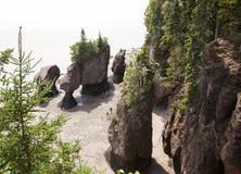 Strand av högst Tides royaltyfri bild