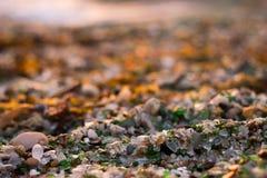 Strand av kristaller Arkivfoton
