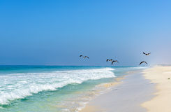 Strand av Salalah, Dhofar (Oman) arkivfoto