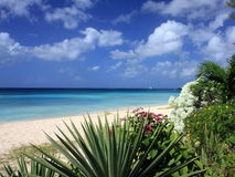 Strand in Barbados Stock Foto's