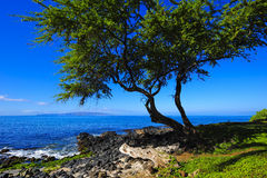 Strand-Baum-Anblick Lizenzfreies Stockbild