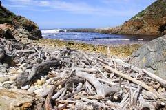 Strand bedeckt in den Treibholz- und Seesteinen Stockfotos
