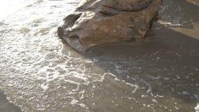 Strand bewegt 4K wellenartig stock video