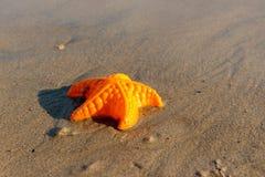 Strand bewegt Starfish und farbige Spielwaren wellenartig Stockbild
