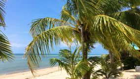 Strand bij koh Phangan stock videobeelden